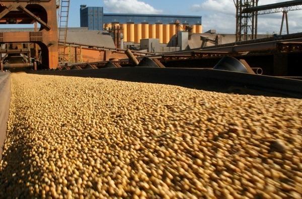 Preocupante: exportaciones de soja caen 1,15 millones de toneladas