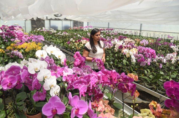 Paraguay quiere competir con la orquídea importada de Brasil
