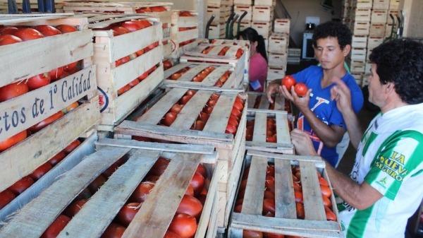 Agricultores piden más asistencia para potenciar producción