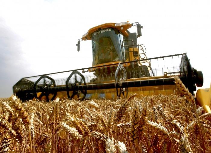 Alertan sobre posible falta de semillas de trigo