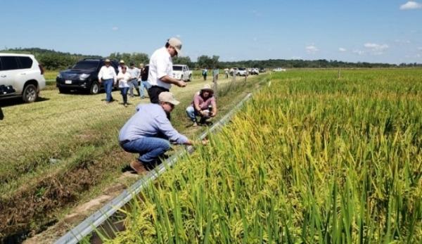 IPTA y Agencia coreana KOPIA implementan proyecto para expandir cultivo de arroz en Paraguay